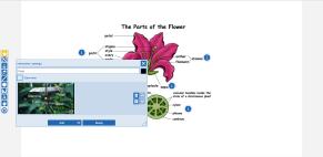video flower